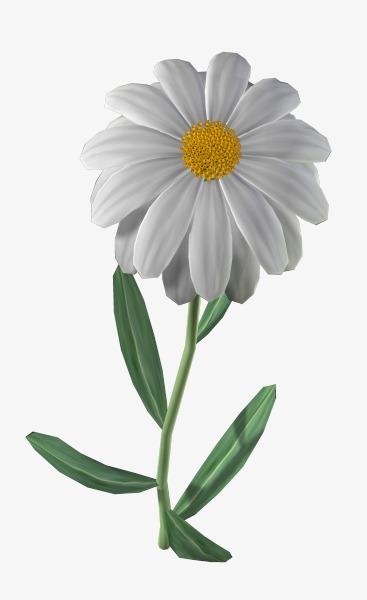 Названиями, картинки цветы ромашка для детей