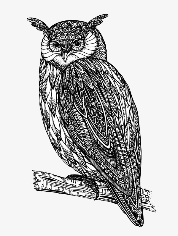 Cute Hitam Dan Putih Burung Hantu Klip Comel Hitam Dan Putih Owl