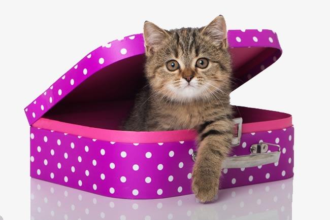 Gambar Kucing Warna Pink godean.web.id