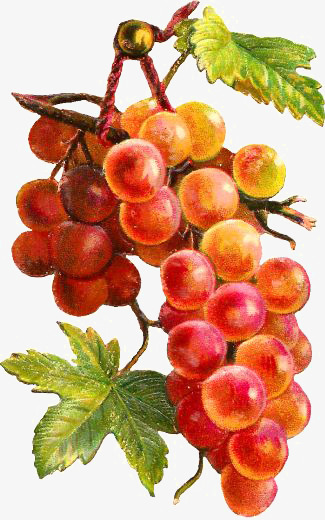 Drawing Grapes, Creative Fruit, Ripe Red Grapes, Cartoon ...