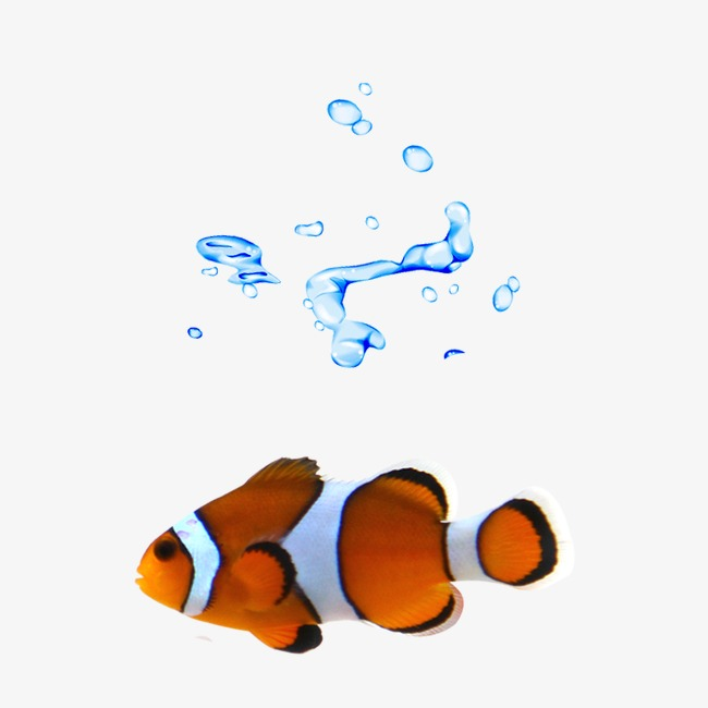 fish swimming in clip art animations n - 650×650