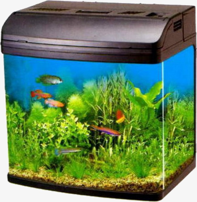 Fish Tank Fish Clipart Aquarium Tank Png Image And Clipart For