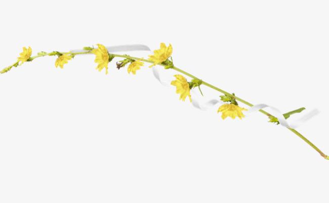 Floral Flower Vine Flower Clipart Vine Clipart Yellow Flowers Png