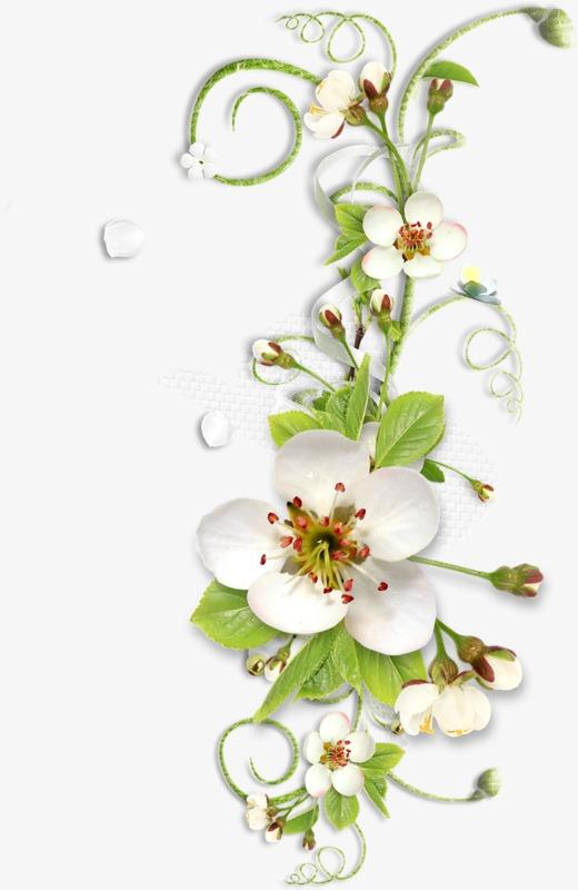 floral motif fleur motif les fleurs fichier png et psd