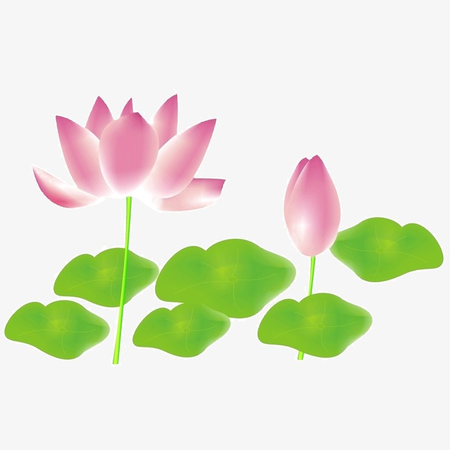 Flower Album Flower Vector Lotus Pink Png And Psd File For Free