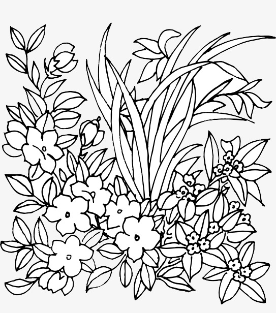 Flower Line Drawing Flower Clipart Line Clipart Plants Abstract