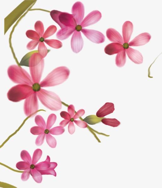 Flores Flores Flores De Color Rosa Taobao Material Flores Flores