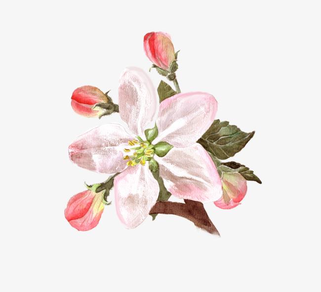 Flores Y Capullos Flor Bud Flor Rosa Imagen PNG para Descarga gratuita