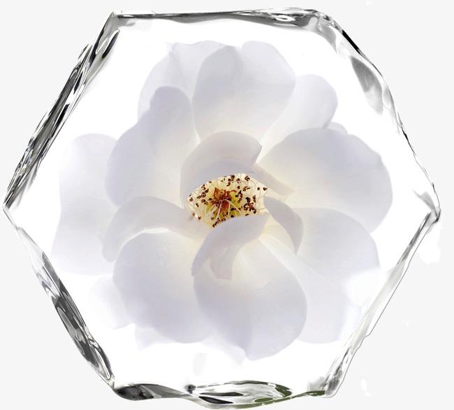 Fleur De Glace Les Fleurs De La Glace Fleur De Glace Fichier Png Et