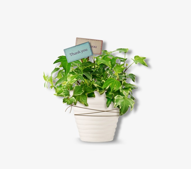 Die Blätter Der Pflanze Blumentopf Sachleistungen Die Blätter