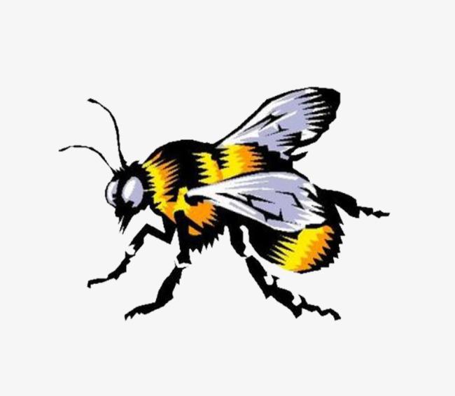 exemption en mati u00e8re de creuser une abeille les abeilles jaune l image de dessin de peints  u00e0 la