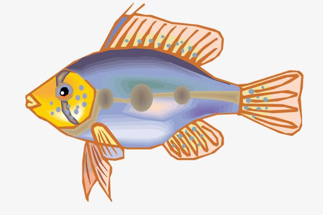 Freshwater Aquarium Fish Vector Material Fish Clipart Vector
