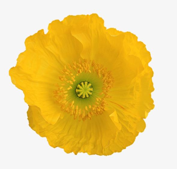 Golden flowers golden yellow flowers png image and clipart for golden flowers golden yellow flowers png image and clipart mightylinksfo