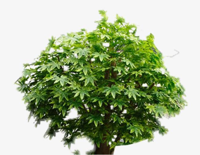 Grüne Sechseck Pflanzen Hex Blätter Grüne Pflanzen Topfpflanzen Png