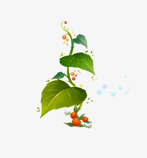 de feuilles vertes de la vigne une plante verte feuilles