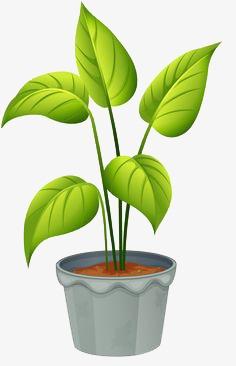 une plante verte cr atif dessin peint la main image png pour le t l chargement libre. Black Bedroom Furniture Sets. Home Design Ideas