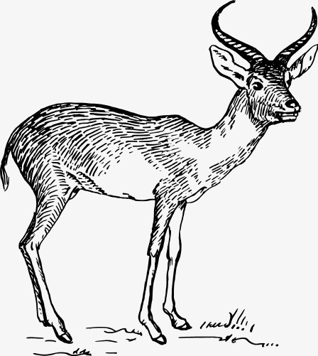 Hand Drawn Cartoon Moose Cartoon Clipart Moose Clipart Cartoon