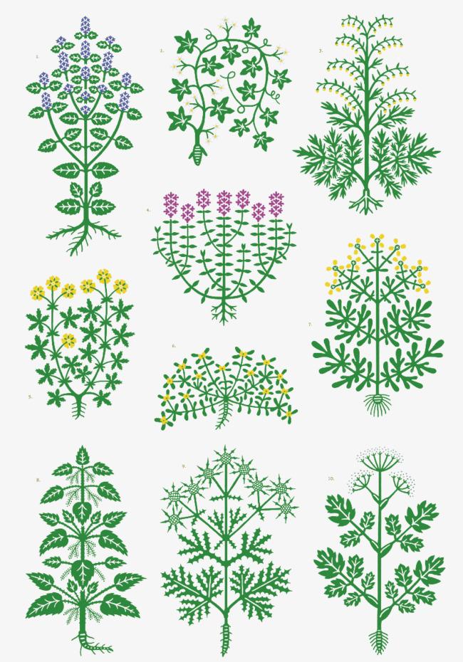 hand drawn diagram medicinal plants, plants clipart, herbal paintedhand drawn diagram medicinal plants, plants clipart, herbal painted, flora png image