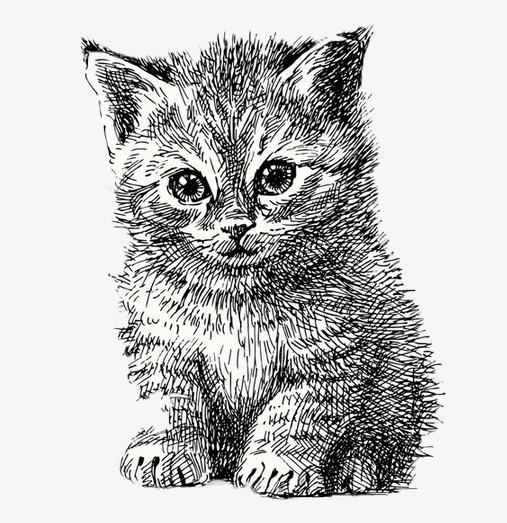 Dessin De Chat Simple Course Illustration Peint à La Main Peint à La