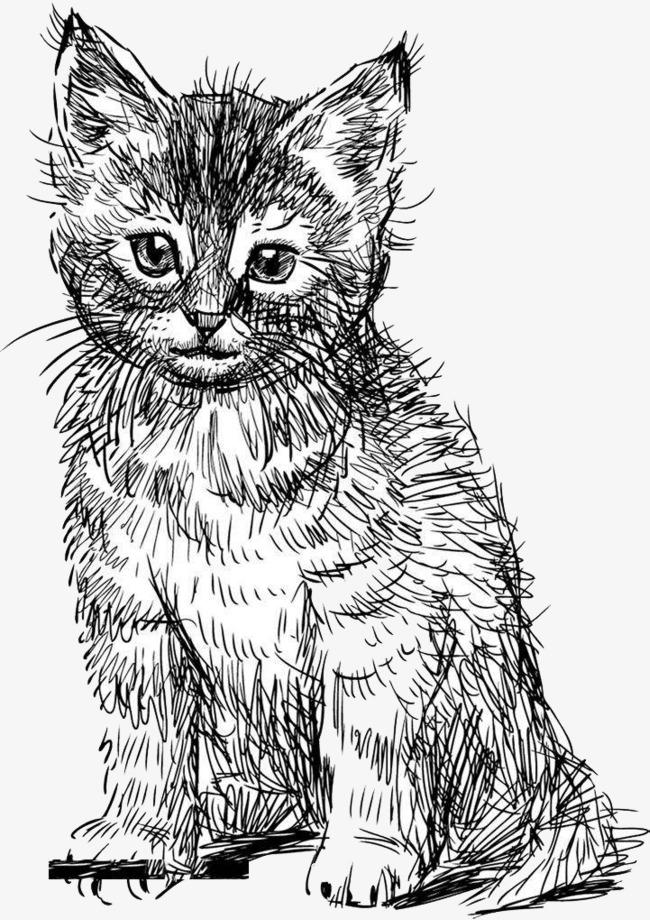 Pintado A Mano De Gato Blanco Y Negro Diseño Nivel Imagen PNG para ...