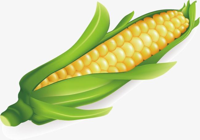 Tangan Dicat Bahan Makanan Makanan Jagung Kuning Png Dan Vektor