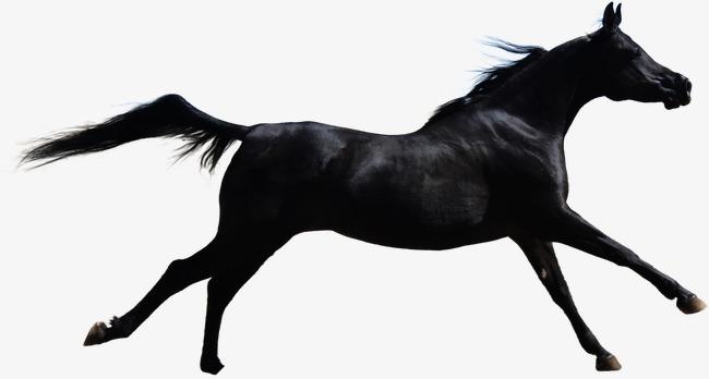 u00e0 cheval cheval noir cheval de l ic u00f4ne dessin de cheval