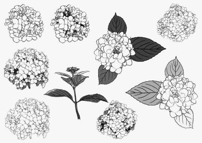 Mano De Pintura Para Colorear Imagen Flores La Coloración Simple ...