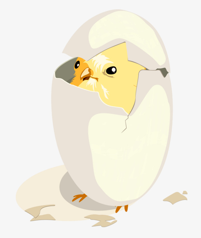 Anak Ayam Menetas Kartun Menetas Telur Imej Png Dan Clipart Untuk