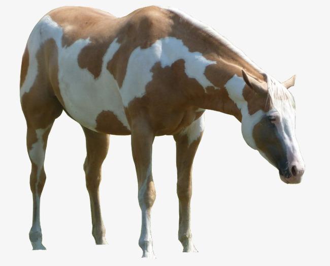 Kuda Vektor Kuda Silhouettes Kuda Vektor Ilustrasi Kartun