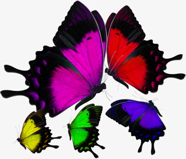 In Kind Colorful Butterflies Material Object Colorful Butterfly