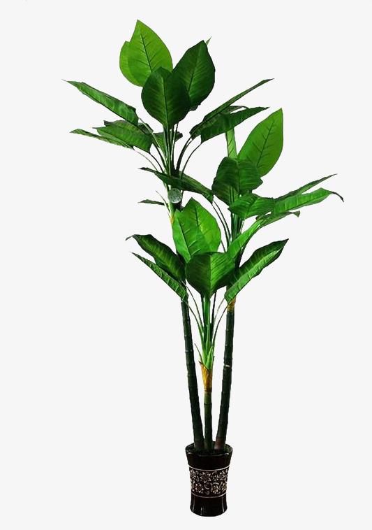 fleur de ginseng l intrieur de la chambre de culture de bonsa gratuit png et clipart