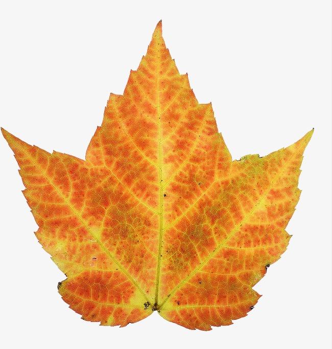 Die Blätter Die Blätter Laub Der Herbst Png Bild Und Clipart Zum