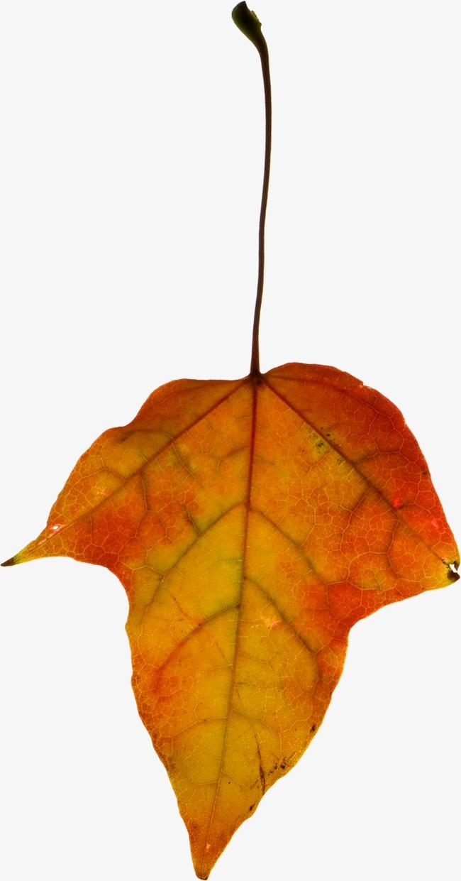 les feuilles des arbres des feuilles rouge les feuilles vertes