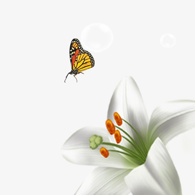 82822d0f2 Lily, Flowers, Butterfly, Spring Clips PNG Transparent Clipart Image and  PSD File for Free Download