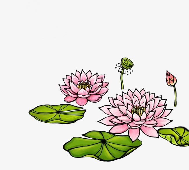 Feuille De Lotus Lotus Dessin De Plantes Dessin De Feuilles Vertes