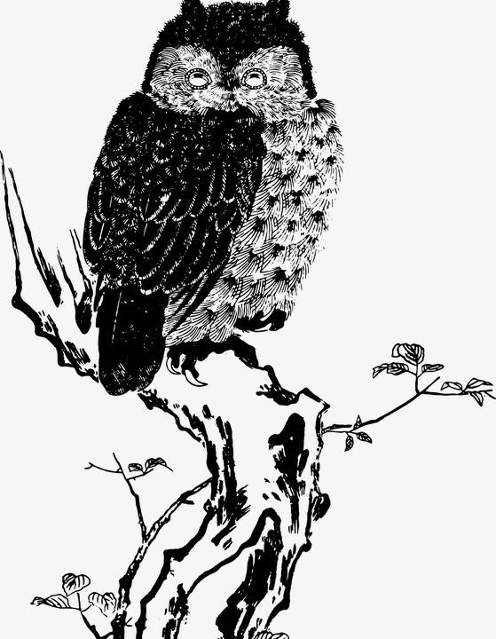 Burung Hantu Hitam Dan Putih Lakaran Lukisan Tangan Dicat Burung