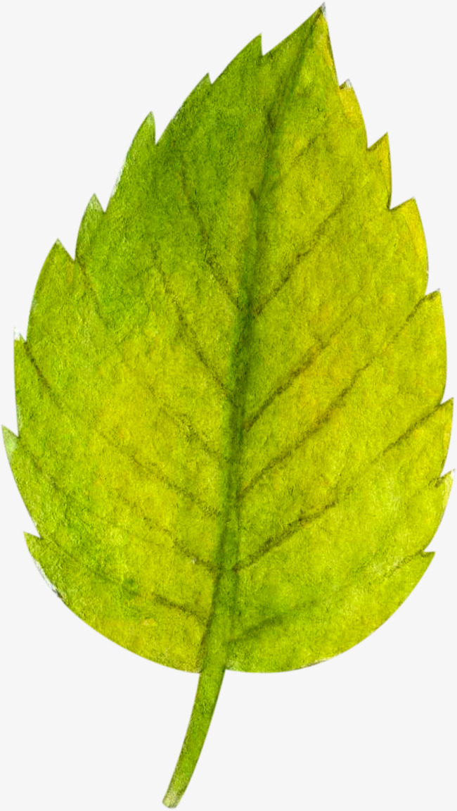 pintado hojas aserradas leaf verde pintura imagen png para