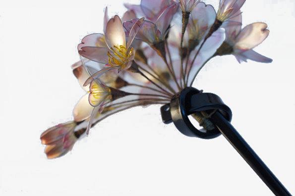 f2162521ec8f персик головной убор женские украшения персик головной убор красивая  головной убор PNG и PSD