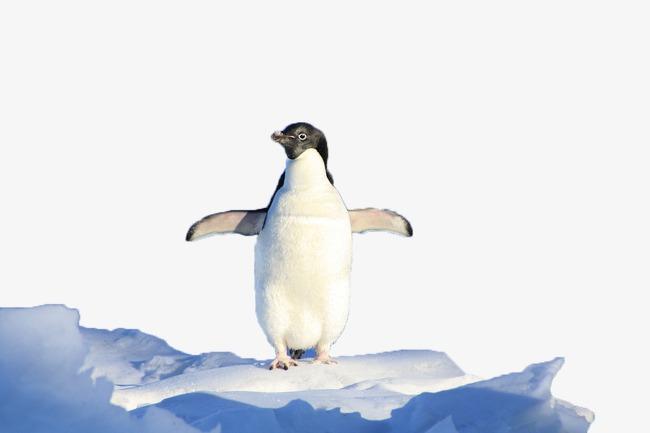 le pingouin blanc le pingouin glacier image png pour le