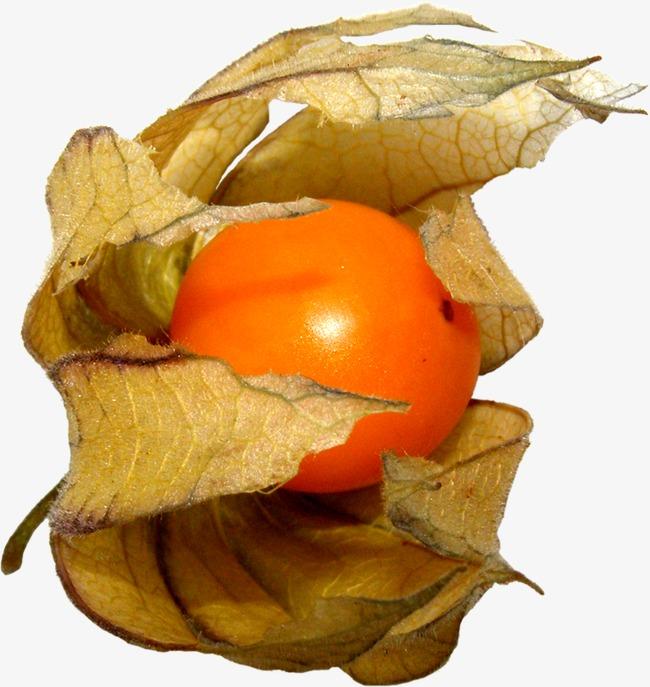 無料ダウンロードのためのほおずき ほおずき 植物 果物png画像素材