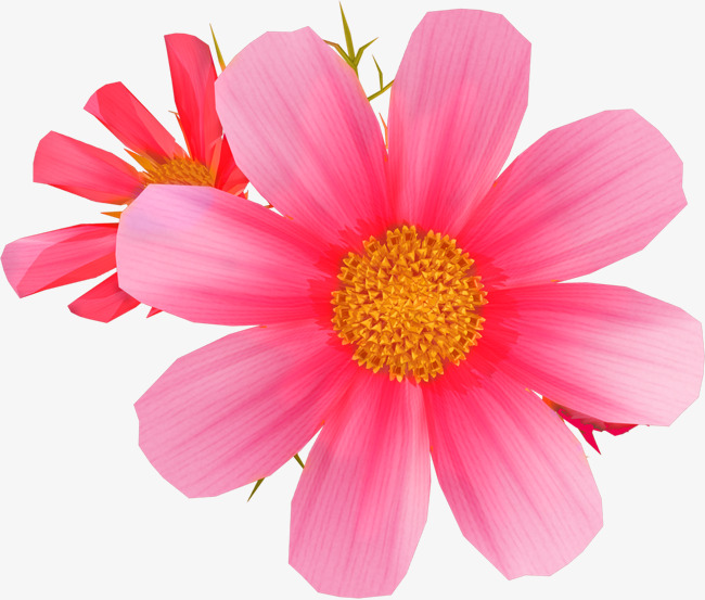Rosa Flores Lindas Flores Flores Flores Imagen Png Para Descarga