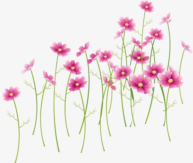 Flores De Color Rosa Flores Flores Flores De Color Rosa Png Y Vector