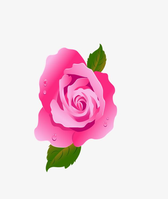 Des Fleurs Roses Dessin Belles Fleurs Des Plantes Png Et Vecteur