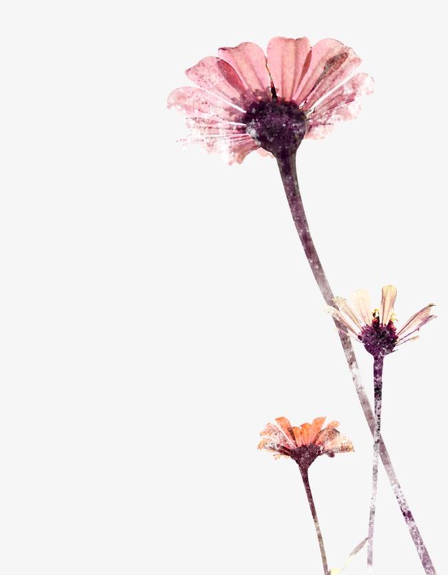 Flores De Color Rosa Flores De Color Rosa Planta Flores Tela Tinta
