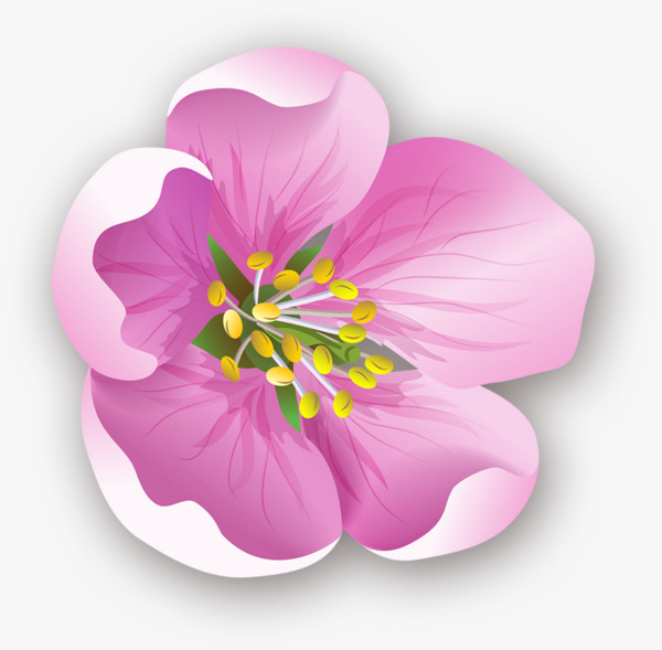pink hibiscus flower flower clipart float flowers png