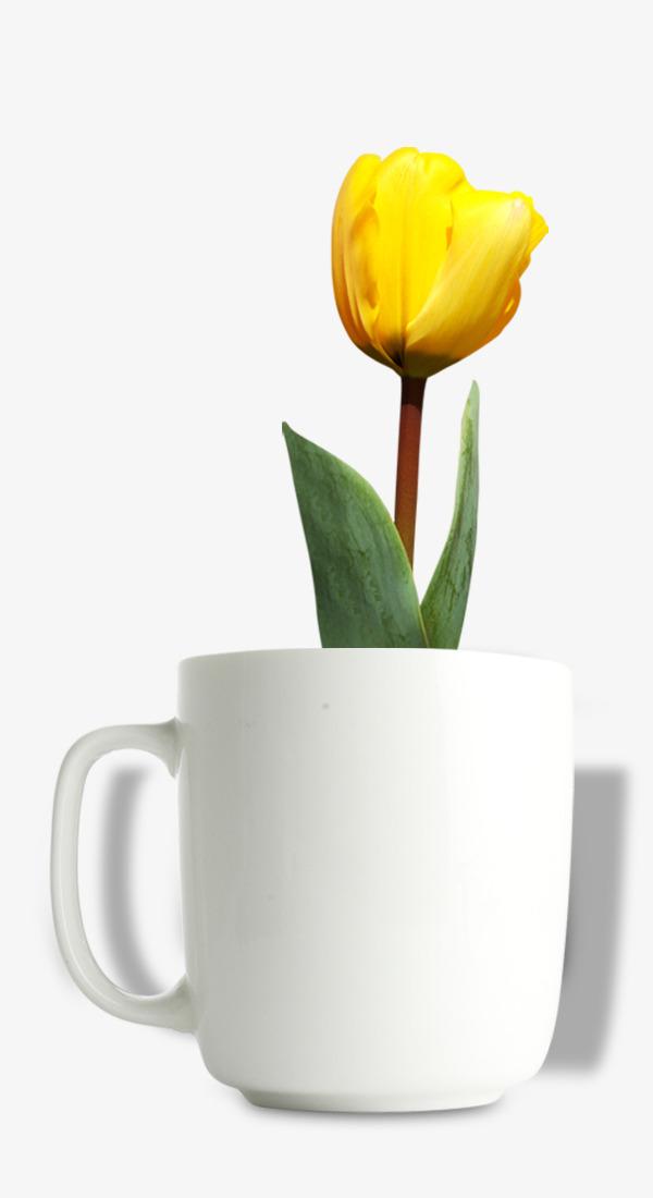 Macetas De Tulipanes Amarillos Pull Material Free Tulip Flores