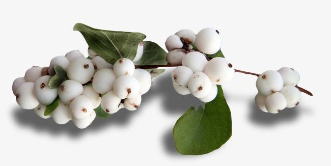 nombre de frutas blancas