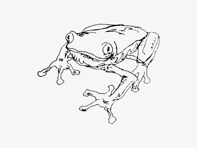 Rainforest Tree Frog Line Drawing Draft Line Clipart Tree Clipart