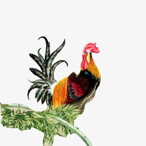 Ayam Berkokok Klip Gambar Cock Buluh Tahun Dari Ayam Jantan Fail Png