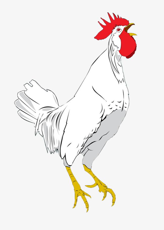 Rooster Gambar Bahan Ayam Jantan Bahan Putih Tangan Dicat Imej Png